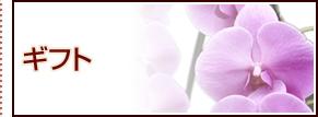 ギフト ミニ観葉植物 寄植え ローズガーデン