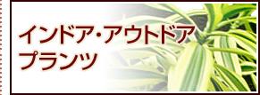 インドア・アウトドアプランツ ミニ観葉植物 寄植え ローズガーデン