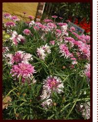 英国最古で王室御用達のフラワースクールに留学した ミニ観葉植物 寄植え ローズガーデン