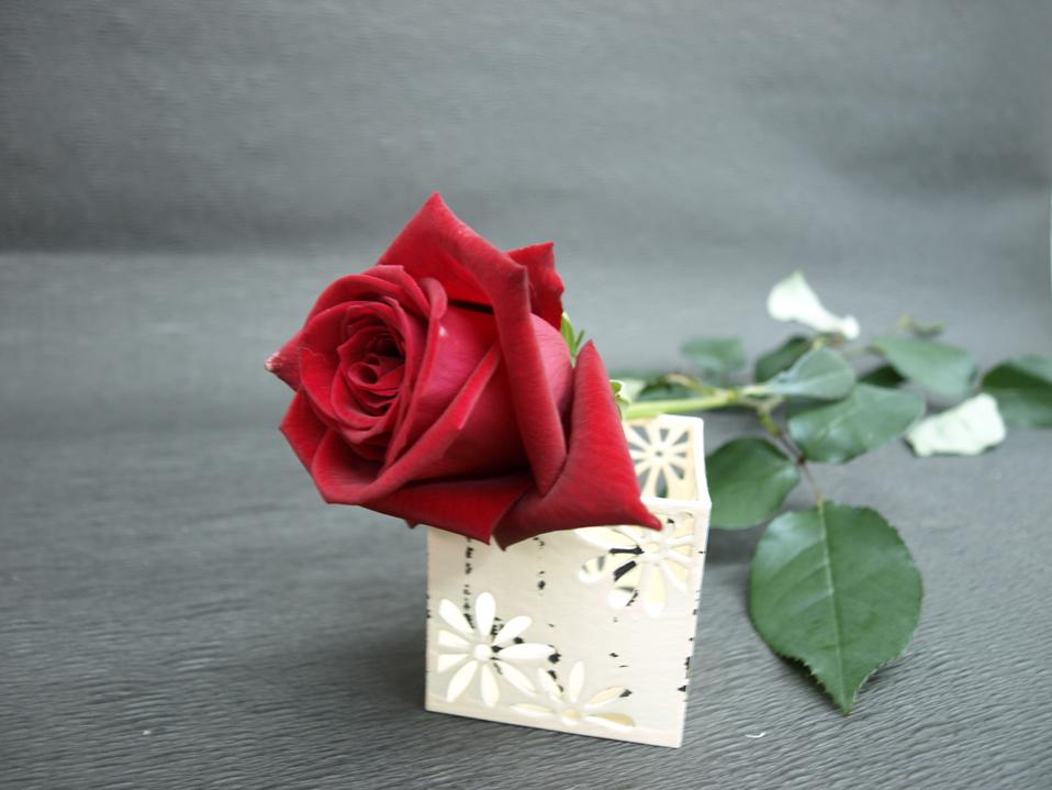 バラ【赤】